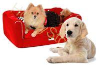 Immagine di Cuccia divano per cane medio